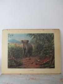 Oude schoolplaat in de rimboe / olifant SOLD