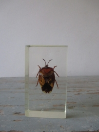 kevertjes / insecten SOLD