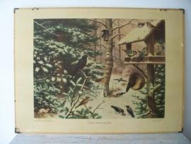 Oude schoolplaat met vogels in de winter SOLD