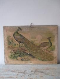Antieke schoolplaat met de pauw