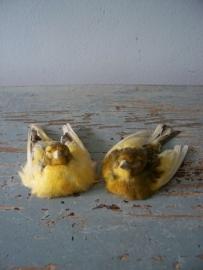 vogeltjes SOLD
