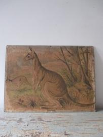 Antieke schoolplaat met de kangaroo SOLD