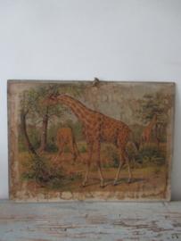 Antieke schoolplaat met de giraffe