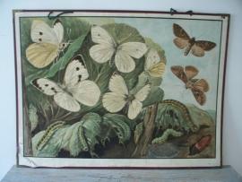 Oude schoolplaat met een vlinders SOLD