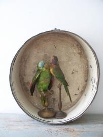 Antieke zinken vitrine SOLD