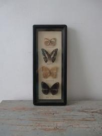Oude vlinders SOLD