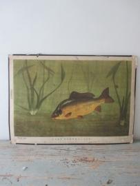 Oude schoolplaat met vis karper SOLD