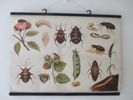 Schoolplaat met insekten SOLD