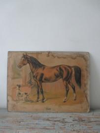 Antieke schoolplaat met een paard