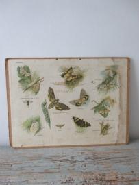 Oude schoolplaat met vlinders SOLD