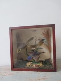 Oude vogeltjes SOLD