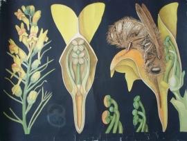 Antieke schoolplaat met de bij en bloem SOLD