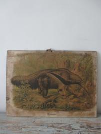 Antieke schoolplaat met de miereneter