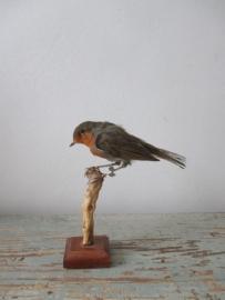 Oud vogeltje SOLD