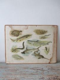 Oude schoolplaat met vissen