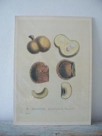 Oude botanische plaat SOLD