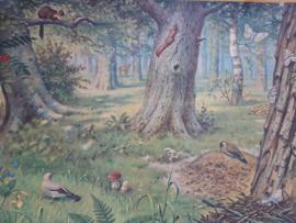 Oude Koekkoek schoolplaat in het bos SOLD