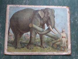 Oude schoolplaat met olifant