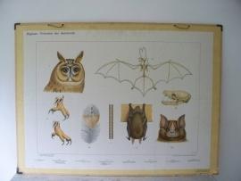 Oude schoolplaat met uil en vleermuis SOLD