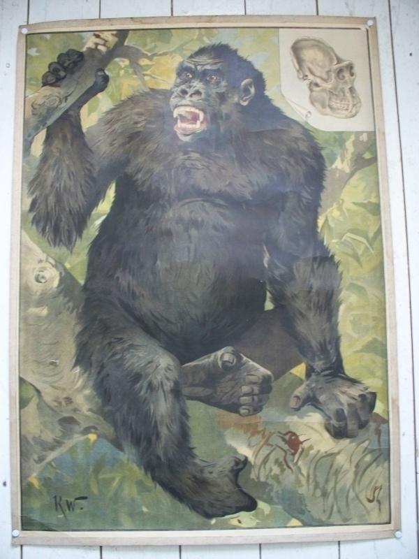 Antieke schoolplaat met een gorilla SOLD