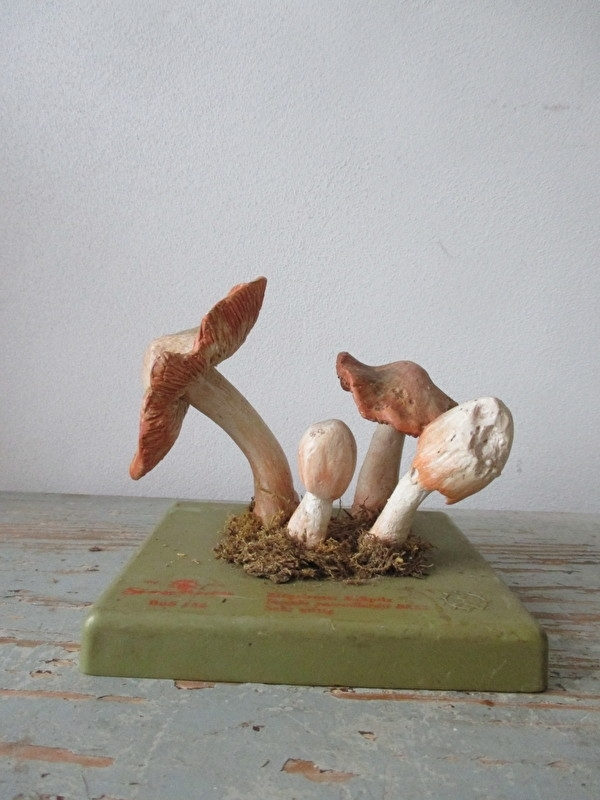 Anatomisch model van een zwam / paddestoel SOLD