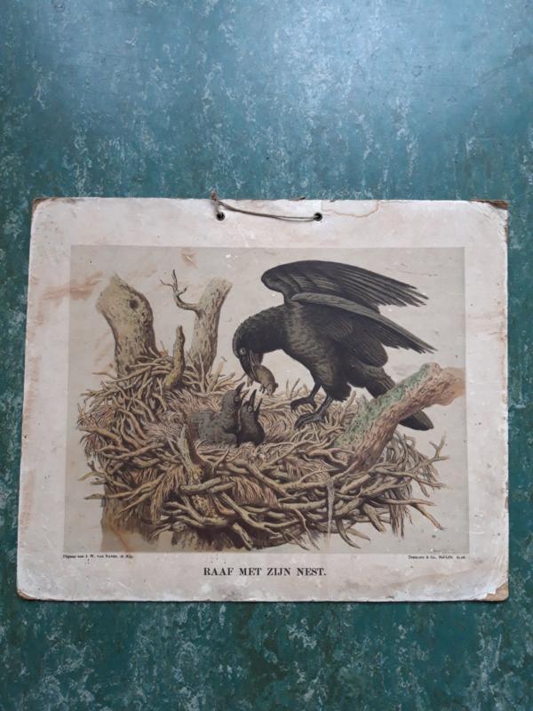 Antieke schoolplaat met de Raaf