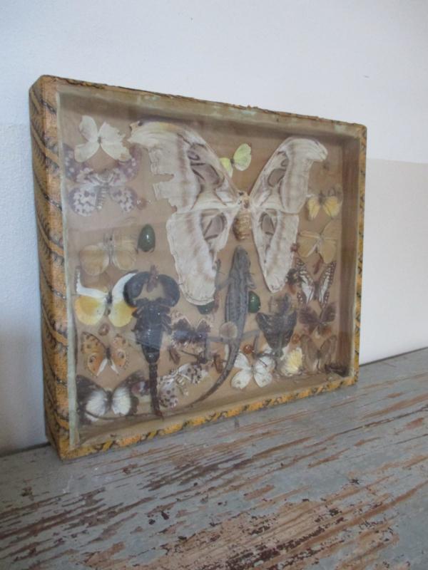 Oude vlinder / reptielen vitrine SOLD