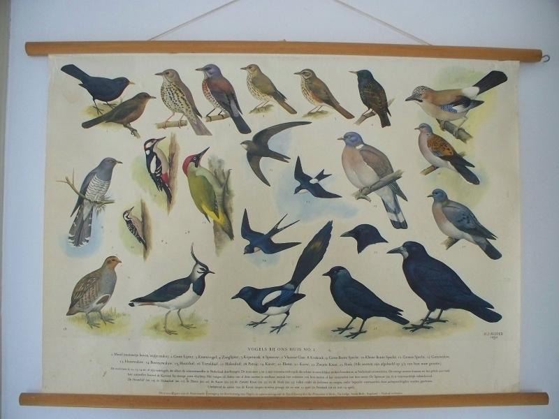 Oude schoolplaat met vogels bij ons huis nr 1 SOLD
