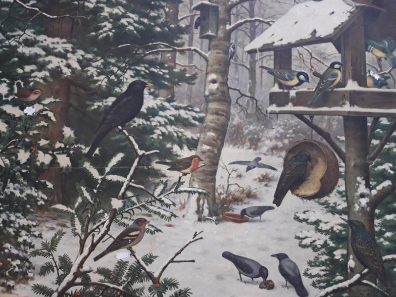 Oude schoolplaat met vogels in de winter