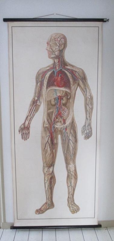 Oude anatomische schoolplaat SOLD