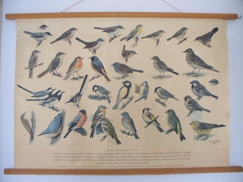 Oude schoolplaat met vogels bij ons huis nr 2 SOLD