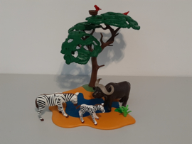 Safari Buffel met zebra's (12875)