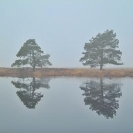 Kaart Reflectie