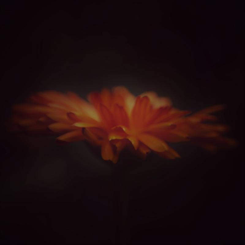 Kaart oranje bloem