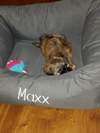 Maxx heeft 2 nieuwe slaapplekjes speciaal voor hem