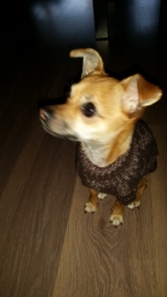 Diva met haar nieuwe trui