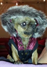 Hummer met zijn nieuwe jas