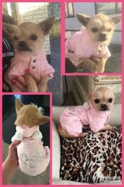 Dolly met haar nieuwe jumper