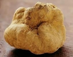 Witte truffel 10 gram sortering 10/20  gr  stukken!