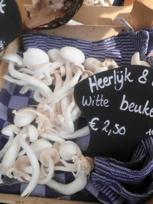 Witte Beukenzwam - Bio 100 gram