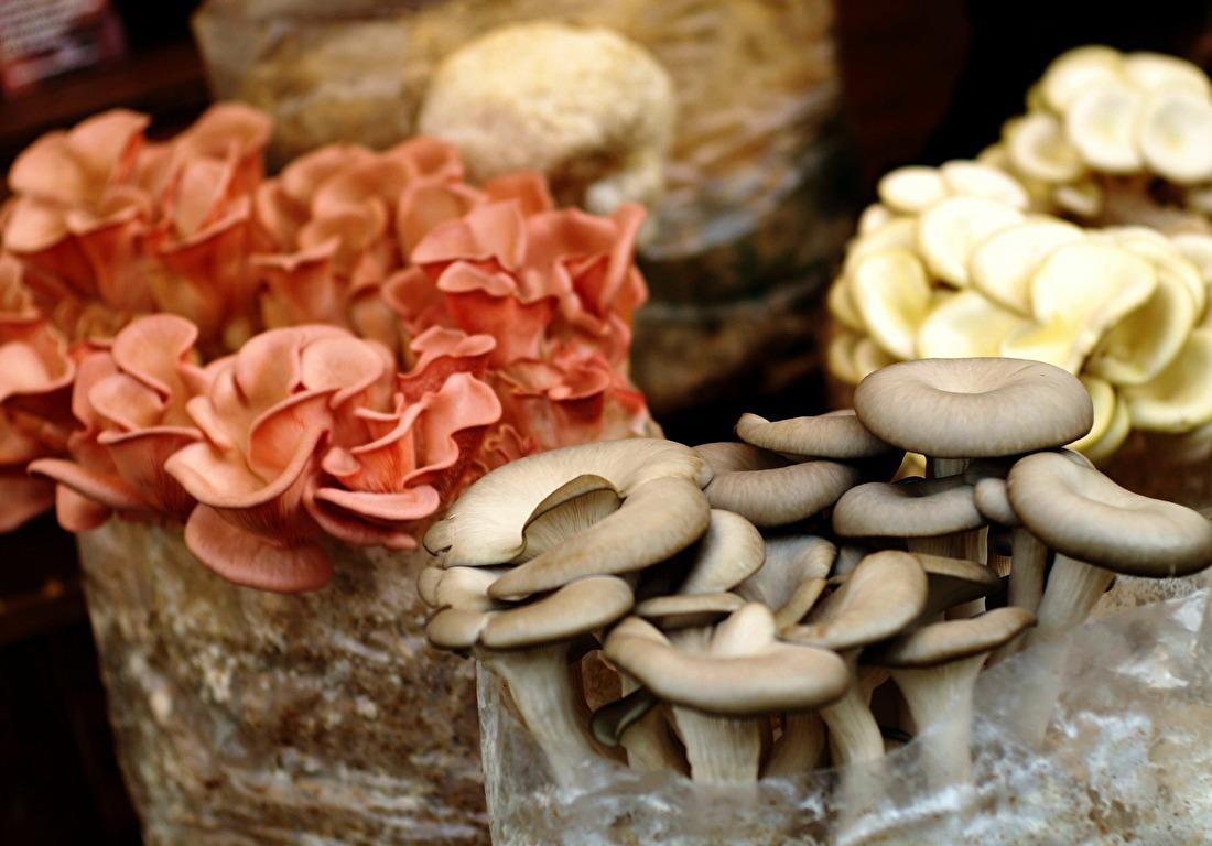 mushroom-1586367_1920.jpg