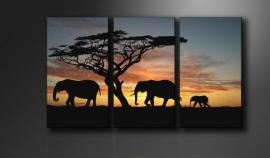 Olifant Afrika