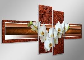 Witte Orchidee Bruin