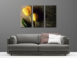 Gele Tulpen