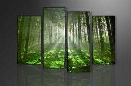 Green Forrest / Groene Bos