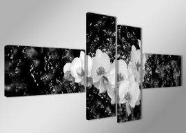 Orchidee Zwart Wit