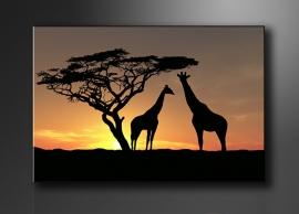Afrika Giraffe