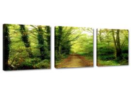 Natuur Pad Bomen