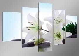 Lelies / Bloemen