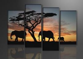 Afrika Olifant